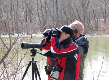 Scanning for early migrants, photo by Carena Pooth
