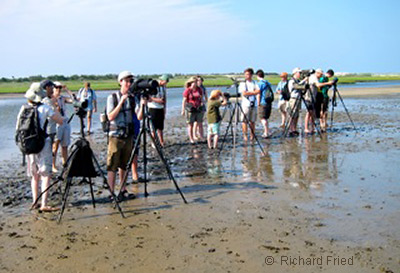 Young Birders at Cupsogue