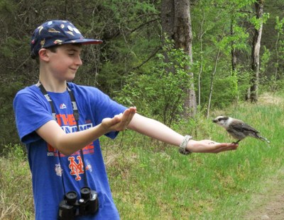 Feeding Gray Jays, photo Carena Pooth